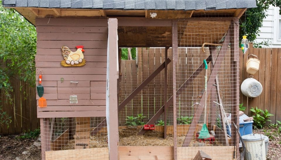 Make your chickens feel safe