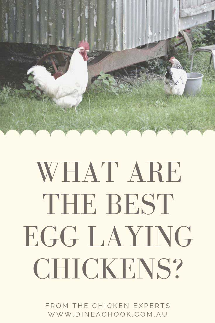What are the best egg laying chickens?