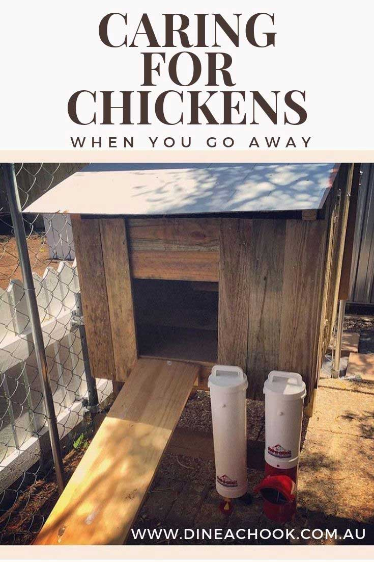 Caring for chickens when you are away