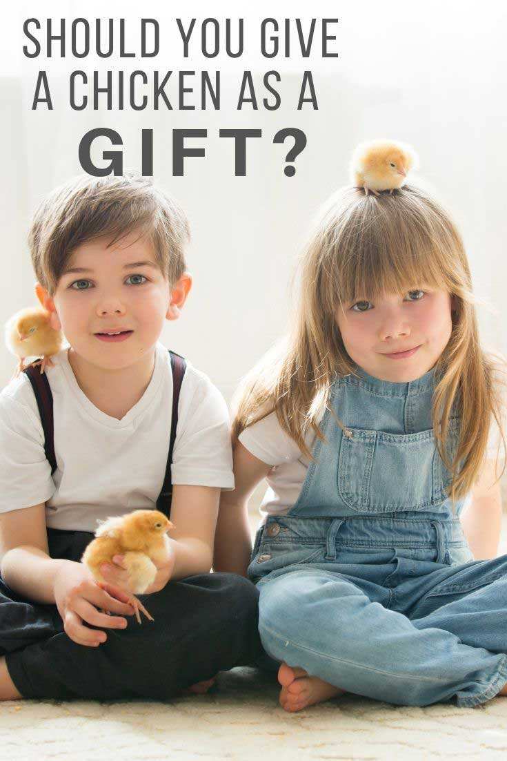 Should you give a chicken as a gift?