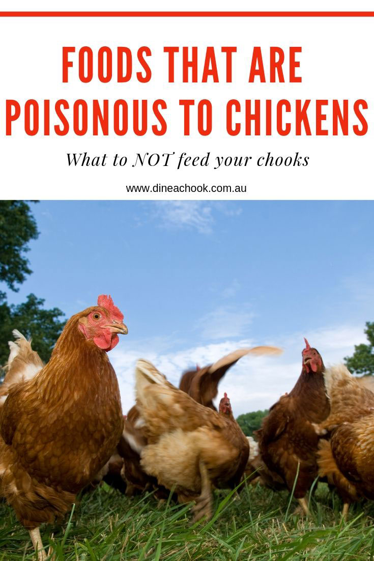 Foods that are poisonous to chickens.