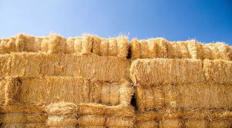 Haybale Igloos for chicken shade