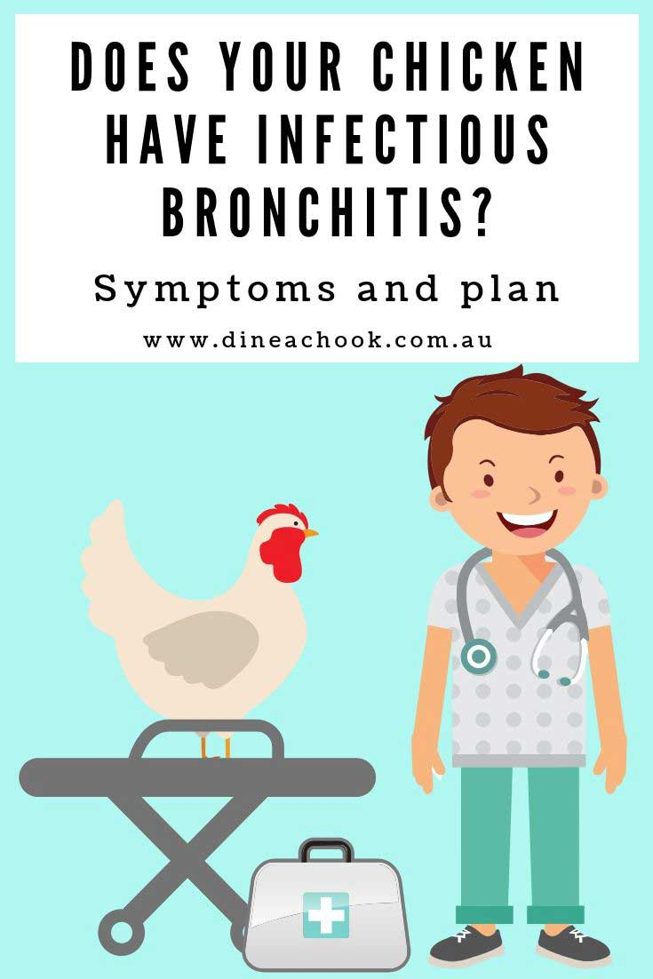 Infectious bronchitis in chickens, signs and symptoms