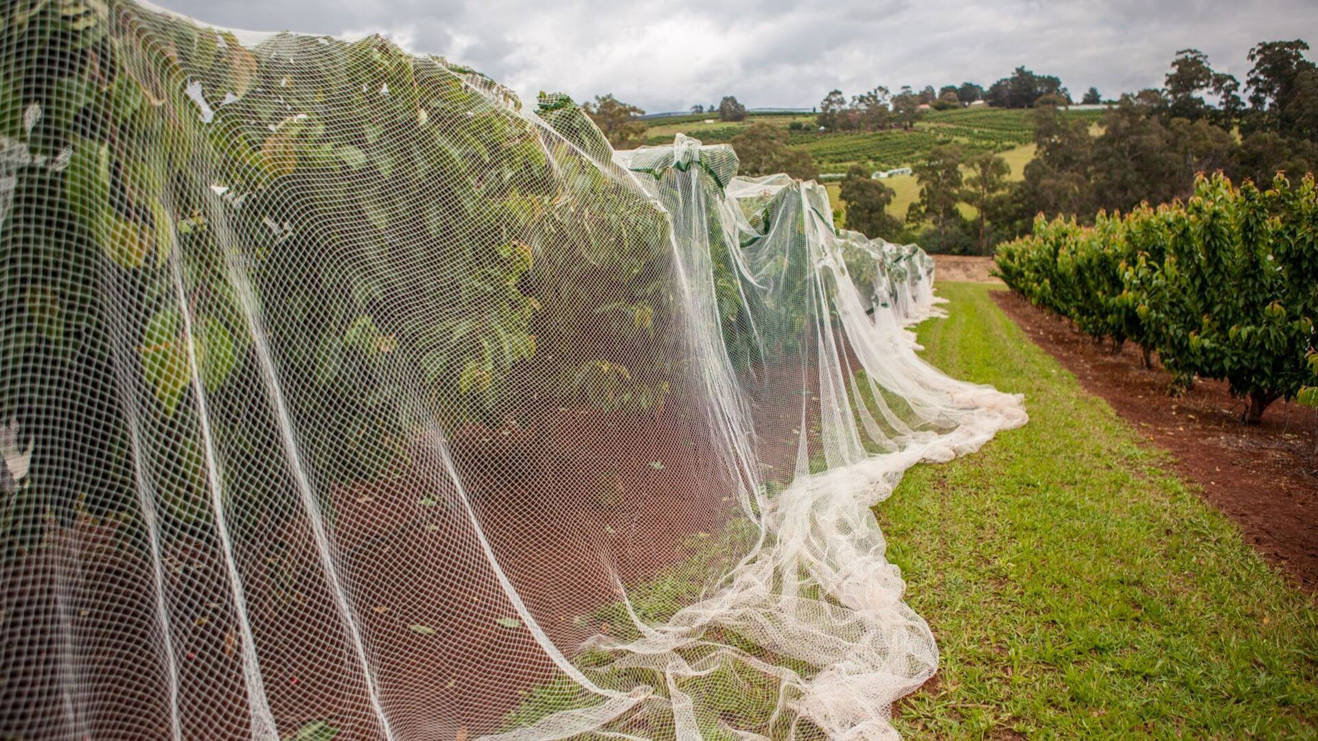 bird netting on trees