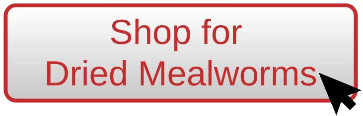 Shop for dried mealworms