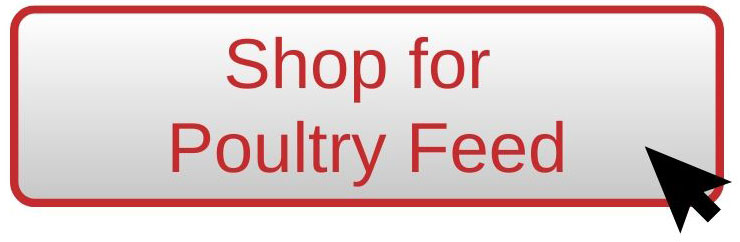 Shop for Poultry Feed